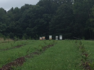 hives at farm