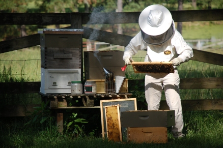 beekeeper North Carolina