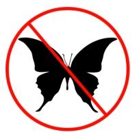 nobutterflies